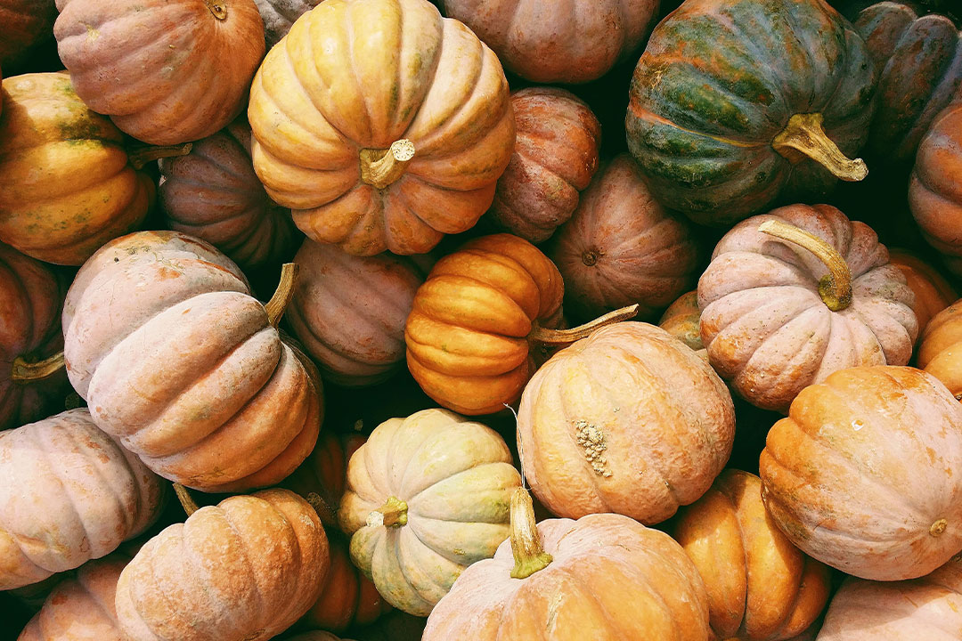 Variety of pumpkins with different sizes